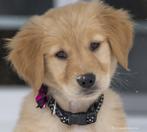 Cuteness Expert