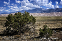 Great Sand Dunes - Sangre de Cristo Mountains