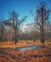 Forest Park - St Louis