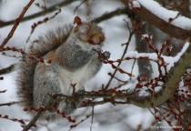WinterBerriesIMG_3654
