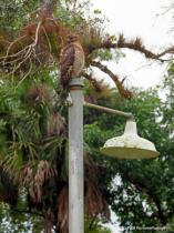 Camoflauge on a Light Pole