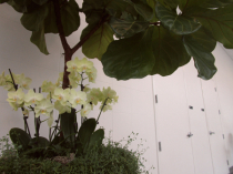 Orchids and architecture