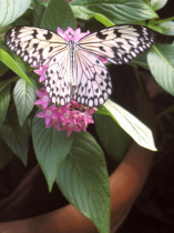 Butterfly with potted flower