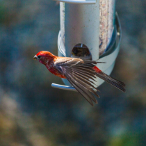 Breakfast with a Finch!