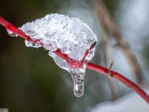 Ice on the red branch