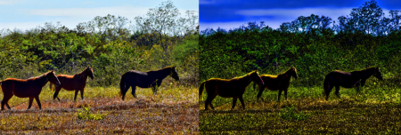 HORSES (BEFORE AND AFTER)