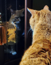 Reflection of a Kitty