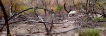 Fire Damage Desert & Wild Horse