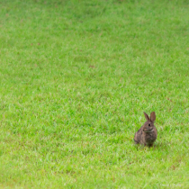 Bunny Grew Up