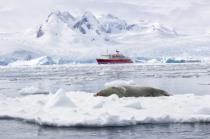 Crab Eater Seal, Antarctica