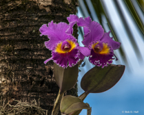 Orchid On A Tree