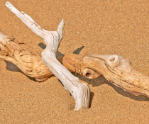Driftwoods on the sand.