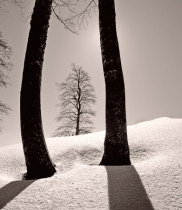 Framed Beech tree.