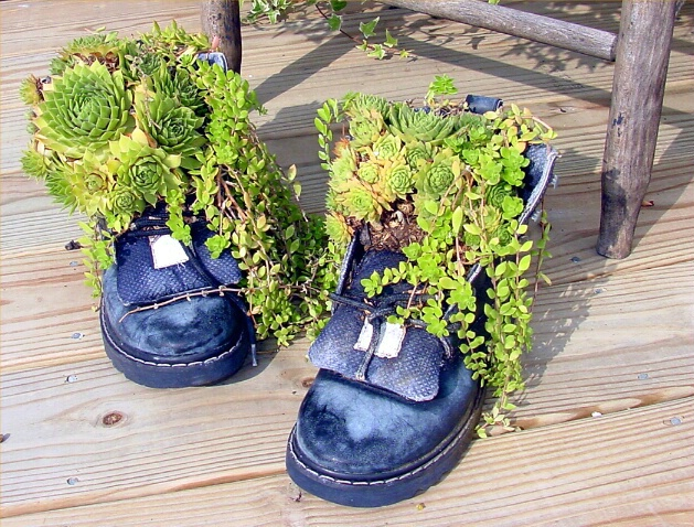 If the shoe fits.....Plant it