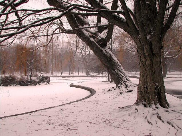 Snow Trees, Boston Gardens
