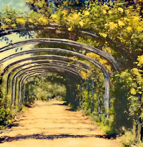 Yellow Rose Lane