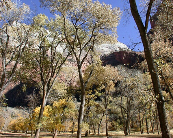Late Autumn In Zion
