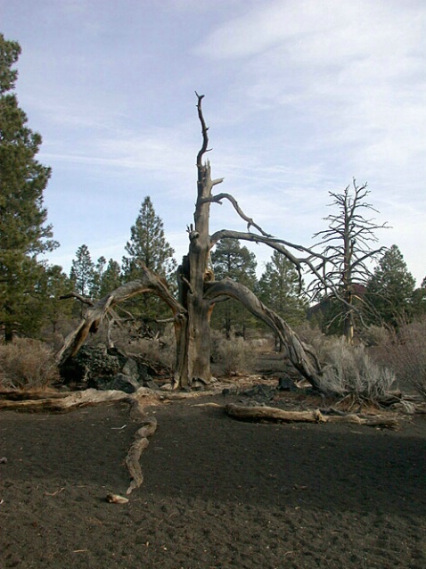 Near Sunset Crater