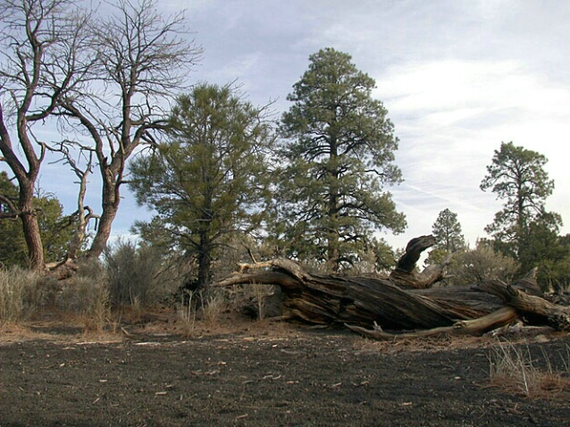 Near Sunset Crater 2