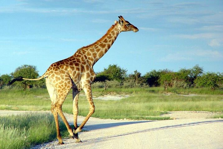 The Tallest Runner