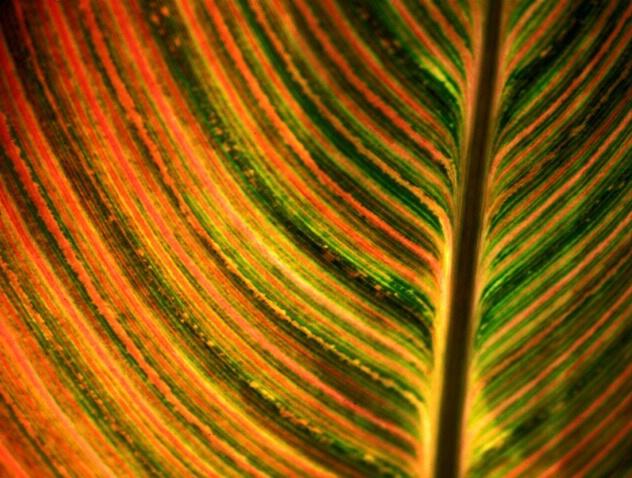 Striated Leaf