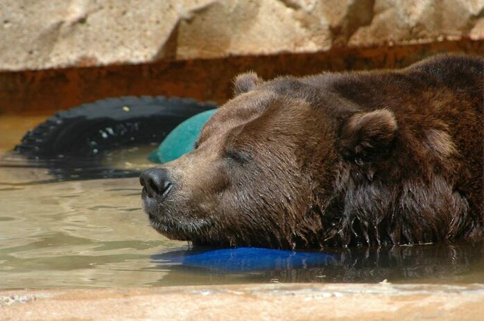 Asleep in the Heat