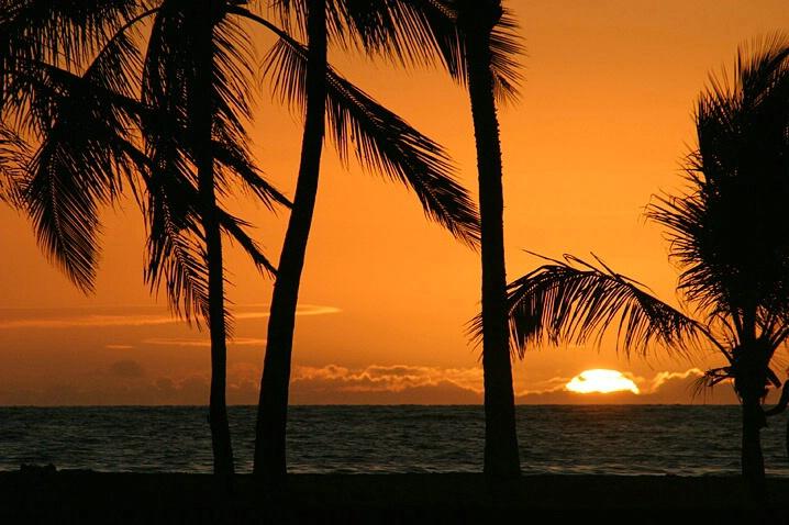 Palm Framed Sunset