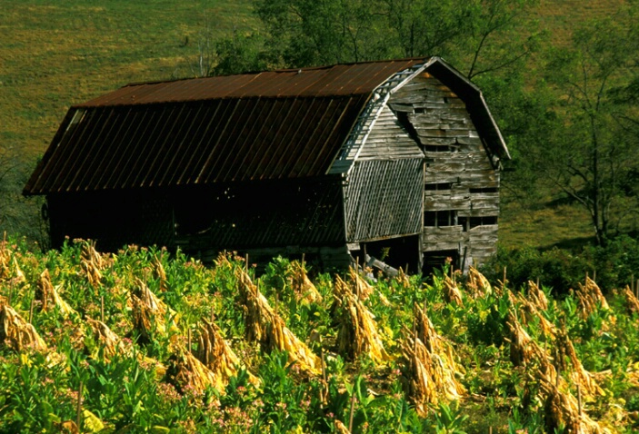 Ol barn awaiting tobacco