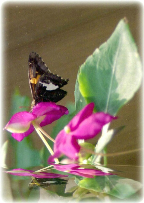 Butterfly Morning