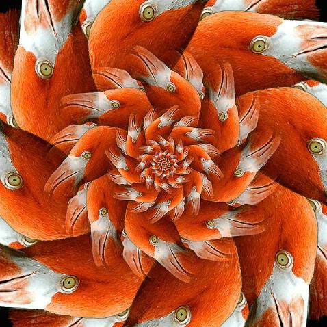 The Flamingo Dimension(f)