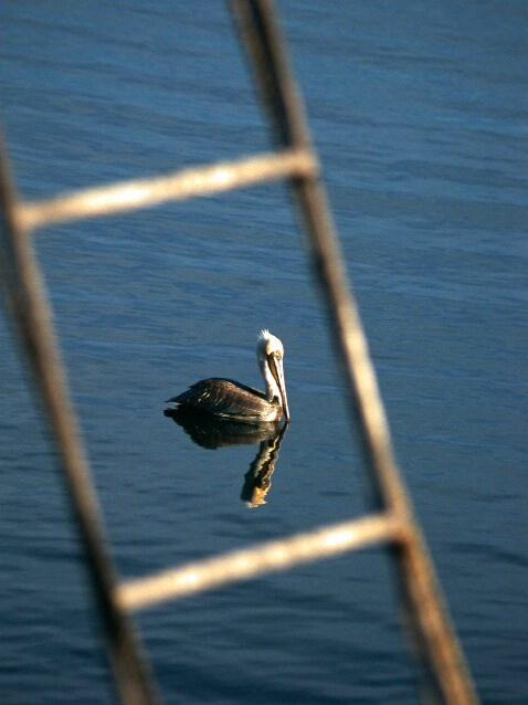 Pelican thru ladder