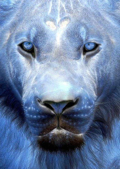 Cerulean Panthera (f)