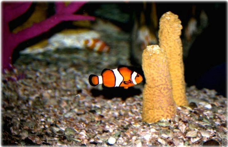 Looks Like Nemo