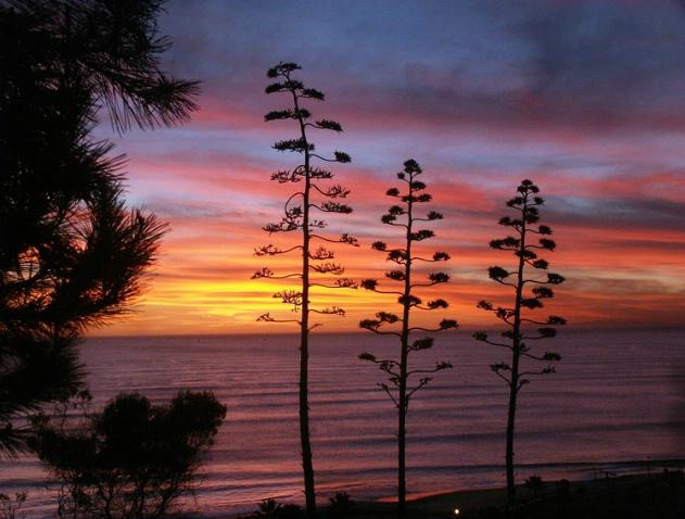 Pines Park Sunset