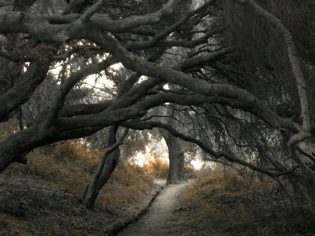 Path to Ichabod Crane