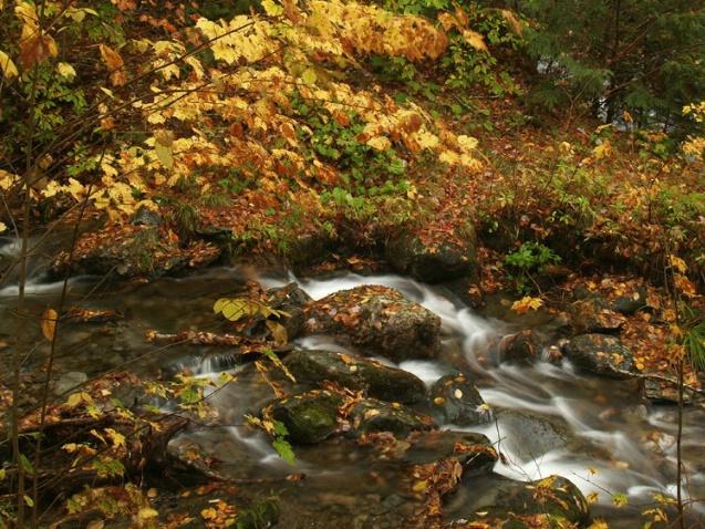 Kancamagus Creek flow, NH