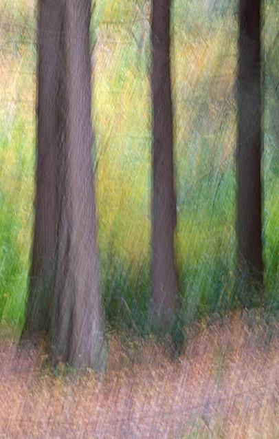 Magic Forest II