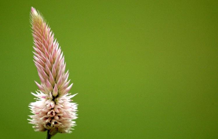 Charlottesville Flower