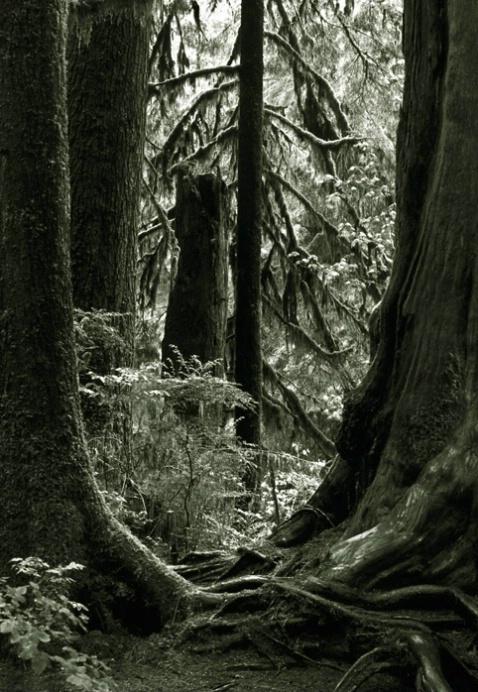 Rain Forest Olympic Penninsula