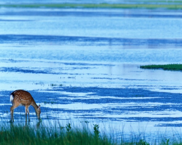 Silka In The Marsh