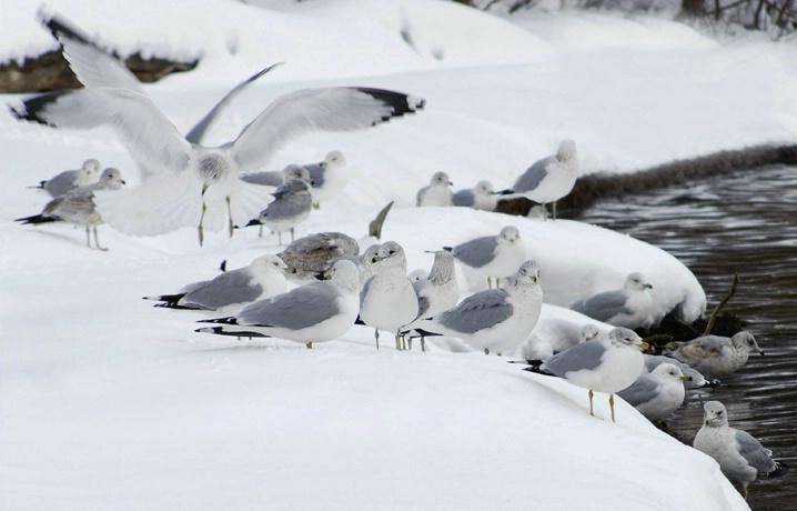 Seagull Huddle