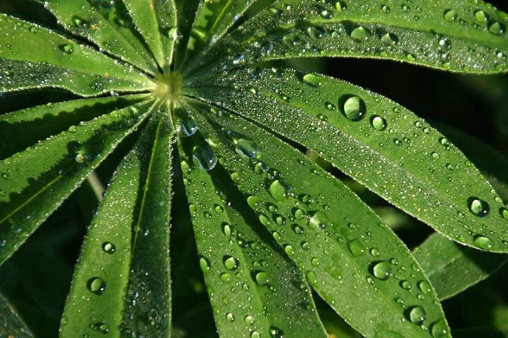 Sprinkled with Dew