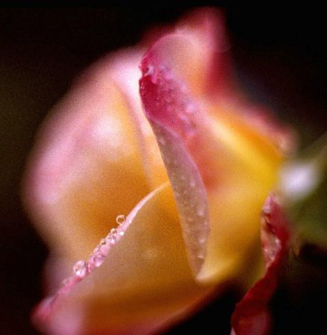 dewdrop 2