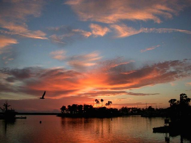Evening Flight Sunset - Dana Point