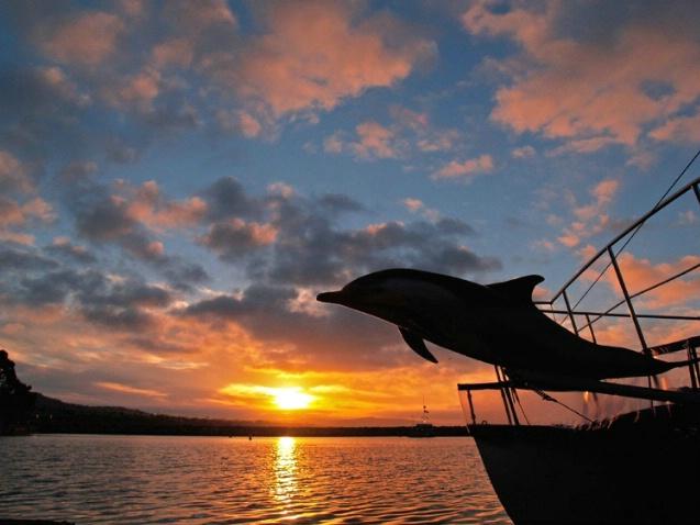 Sunrise porpise catamaran