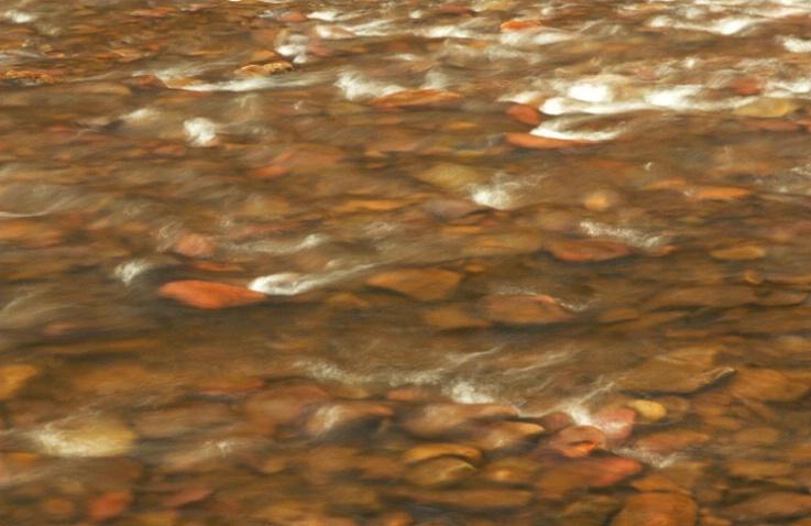 Savage River Run