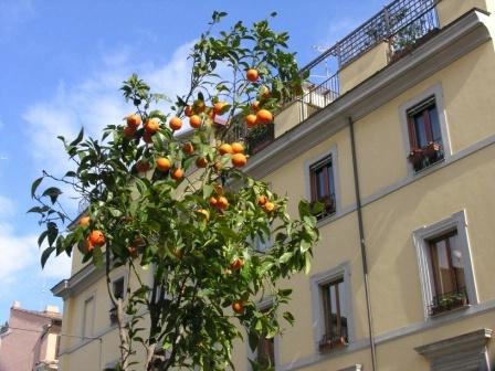 Oranges in Rome