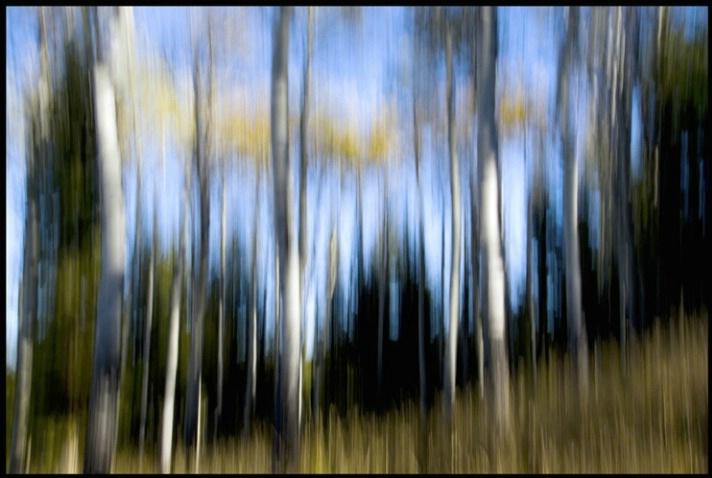 aspen streaks