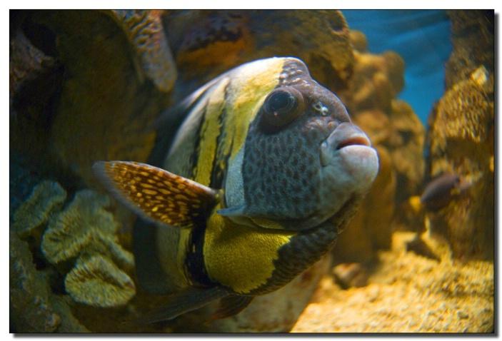 Fish at Baltimore Aquarium