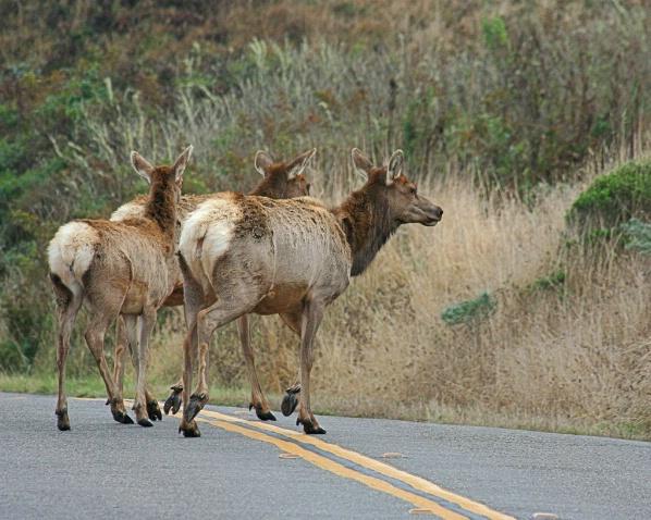 Point Reyes Highway